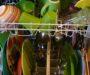 Naredite naravno: Detergent za pomivalni stroj